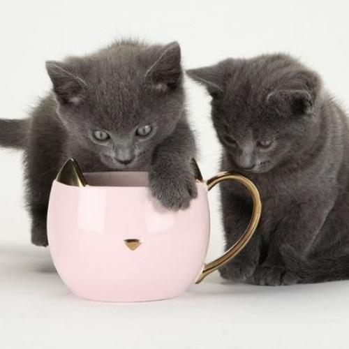 Pinky Up | Süße Kätzchenbecher