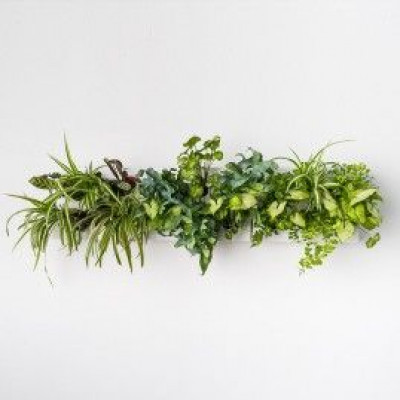 Dreifacher Pflanzer | Horizontal inkl. Wandhalterung
