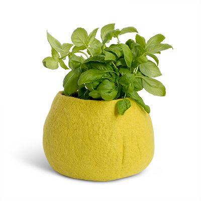 Flowerpot | Olive