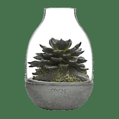 Eden Mini Terrarium