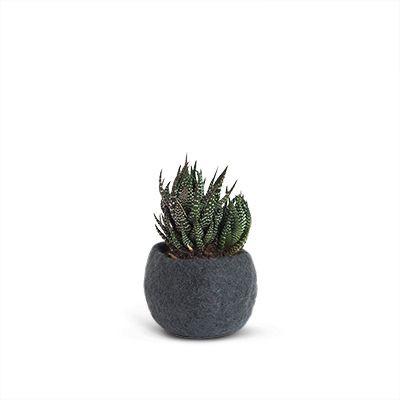 Flowerpot | Dark Grey
