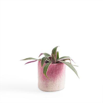 Flowerpot Wool | Pink