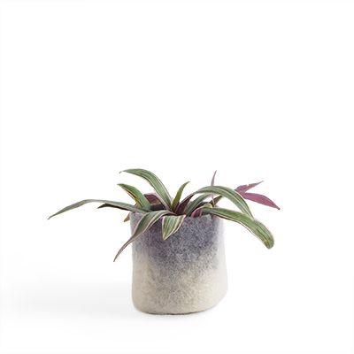 Blumentopf Wolle | Beton