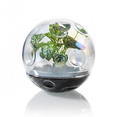 Terrarium Mond   Glas