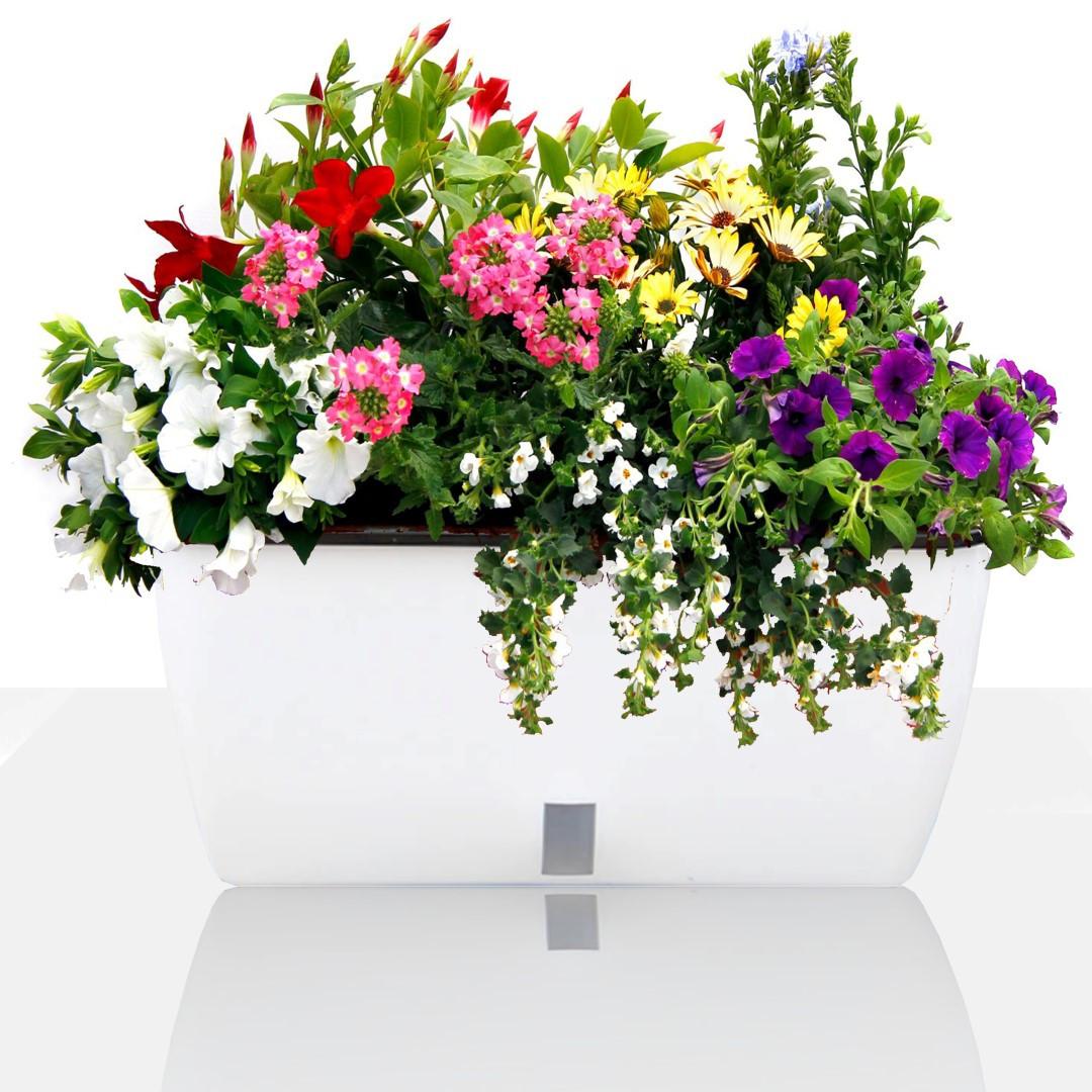 Self-watering Plant Pot Dahlia Big | White