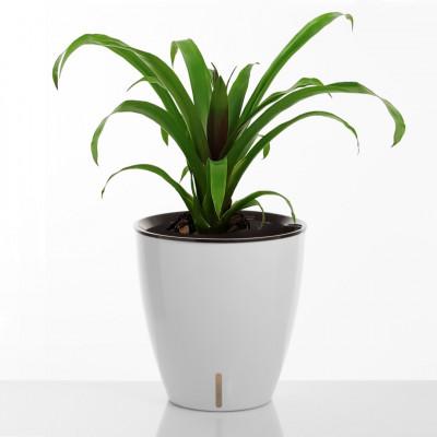 Selbstbewässernder Pflanzentopf Tulip | Weiß