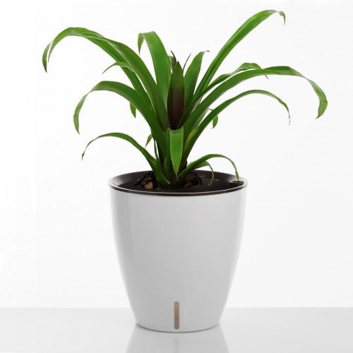 Self-watering Plant Pot Tulip | White