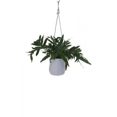 Single Flower Pot | White