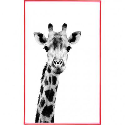 Frame It | Girafe