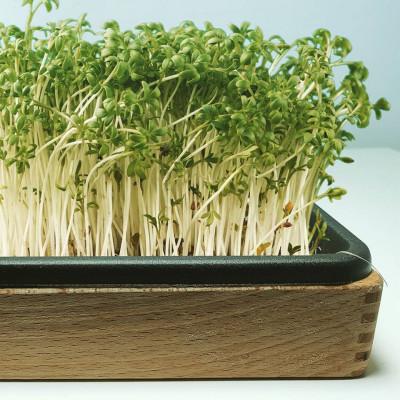 Bio Grünzeug Garden Starter Set + 2x Growing Pads Evolve Garden