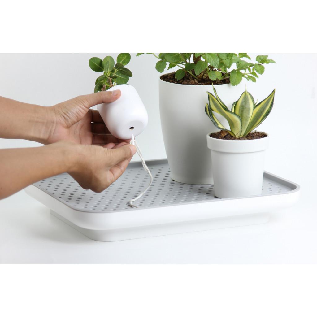Selbstbewässerndes Pflanzentablett Oasis | Weiß
