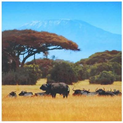 Leinwand | Safari
