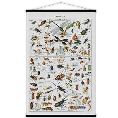 Vintage Poster | Insekten
