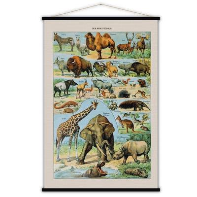 Vintage Poster | Säugetiere