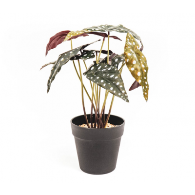 HV Pflanze - Alocasia   15x40x35cm