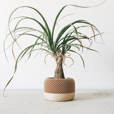 Wooden Geometrical Plant Pot Apple