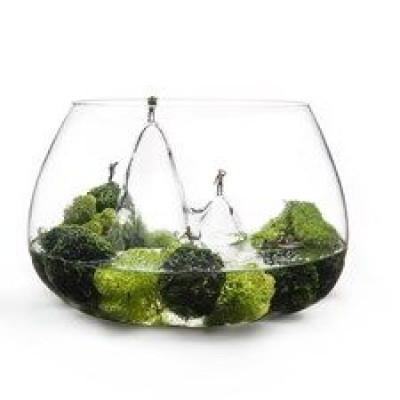 Glasscape Small