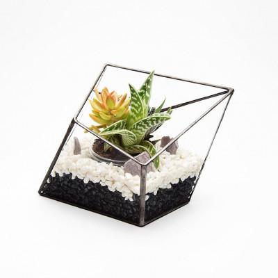 Aztekisches Diamant-Terrarium