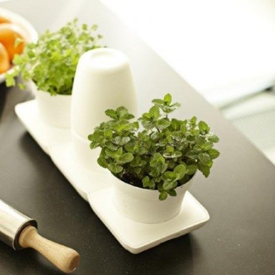 Minigarden Basic S Töpfe Weiß