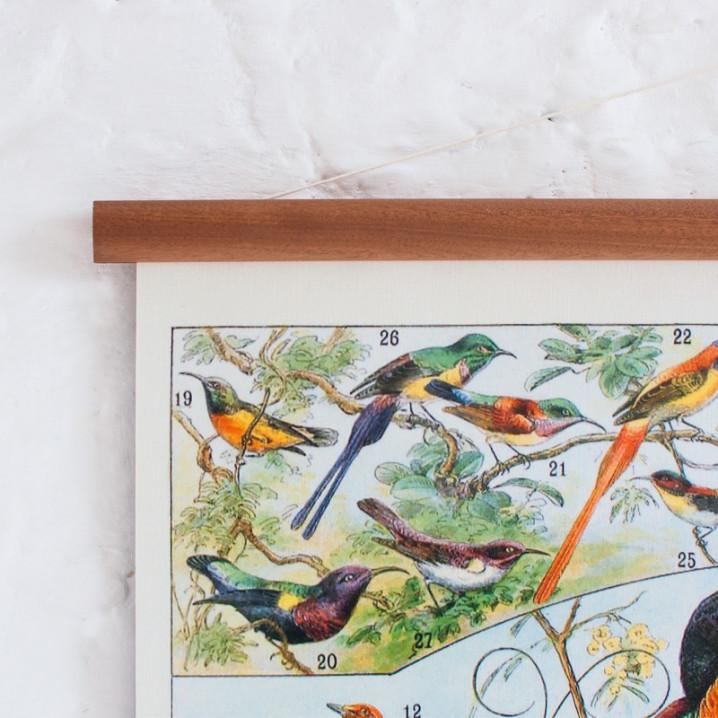 Vintage Poster Vögel