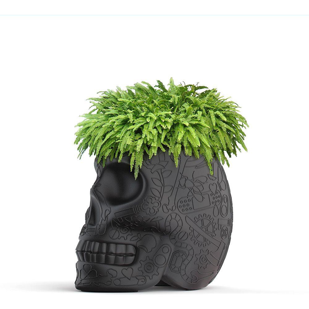 Pflanzer Mexiko | Schwarz