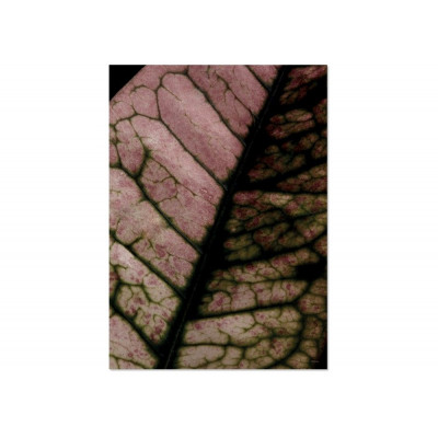 Poster Leaf Network