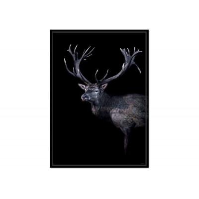 Poster Dear Red Deer
