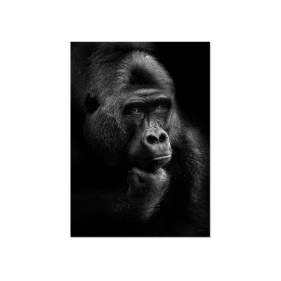 Poster Gorilla Thoughts