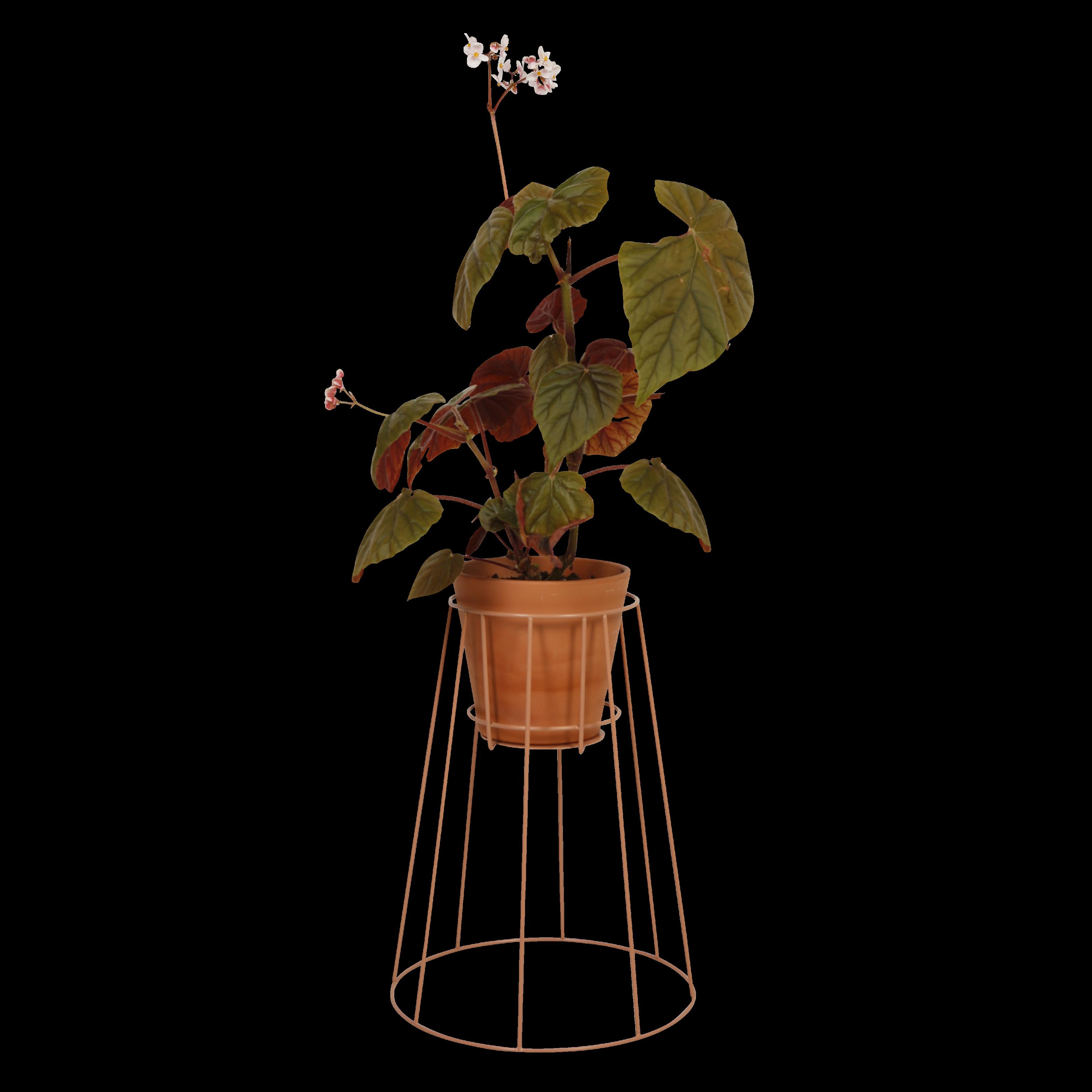Cibele   Pflanzenbestand Staubig-Pfirsich-Klein