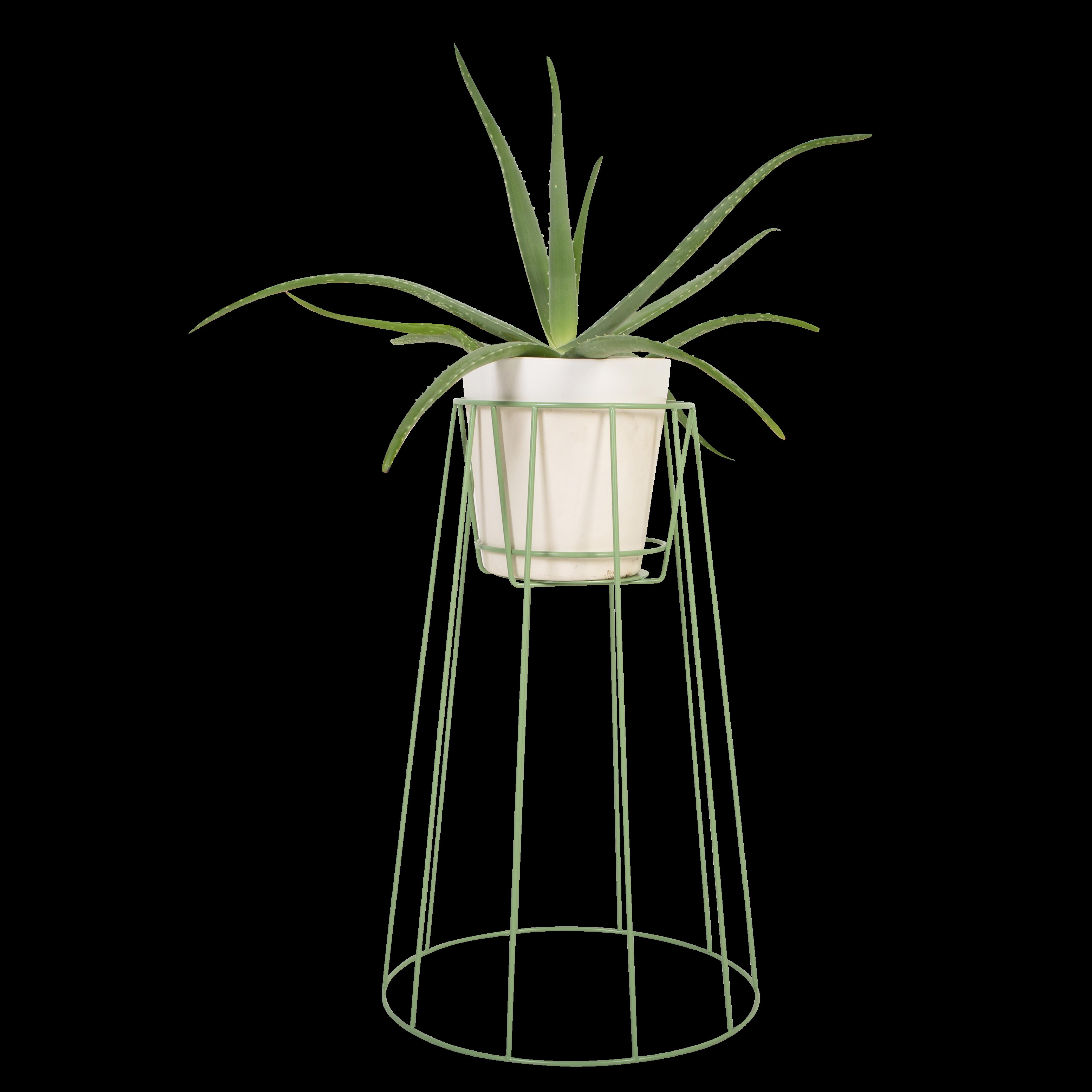 Cibele   Pflanzenbestand Seegrün - klein