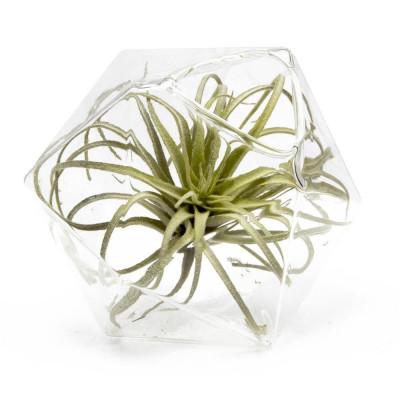 Hudson 5 Vase   Crystal