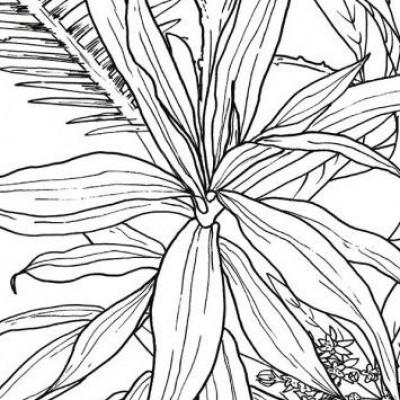 Tapete Dschungel Tropisch Schwarz-Weiß | Deko
