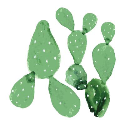 Wandaufkleber   Satz von 2 grünen Kakteen