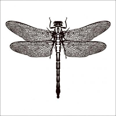 Kachelaufkleber | Libelle