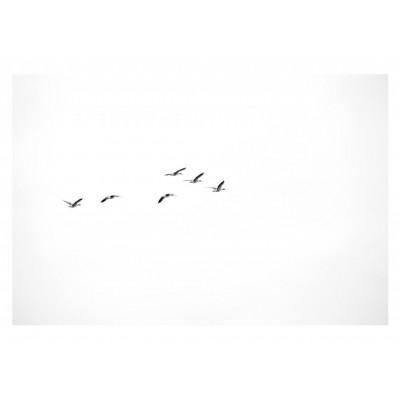 Flying Ducks Kunstfotografie