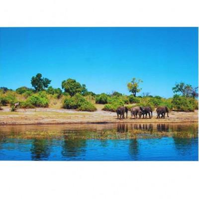 Leinwand | Elefanten