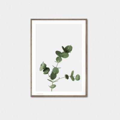 Eukalyptus-Poster