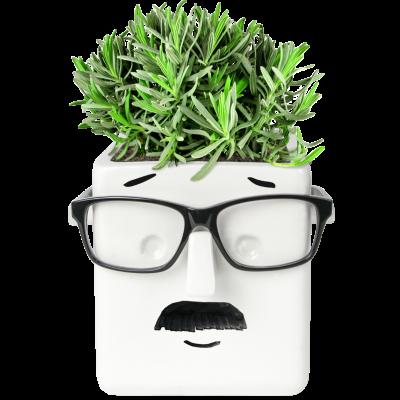 Pflanzenhalterfläche | Weiß