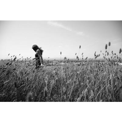 """Art Photograph """"Field Trip"""""""