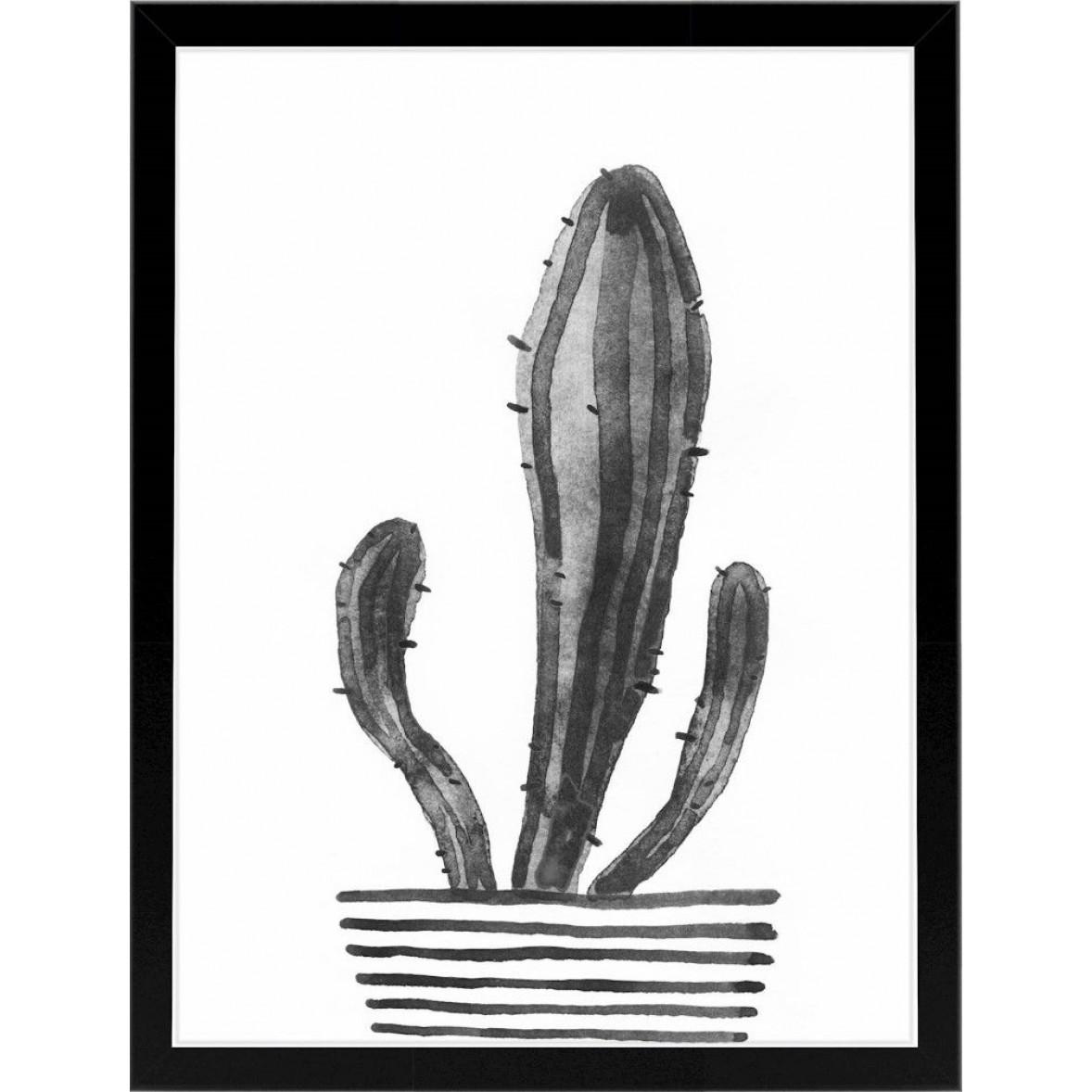 Kaktus | Schwarz-Weiß