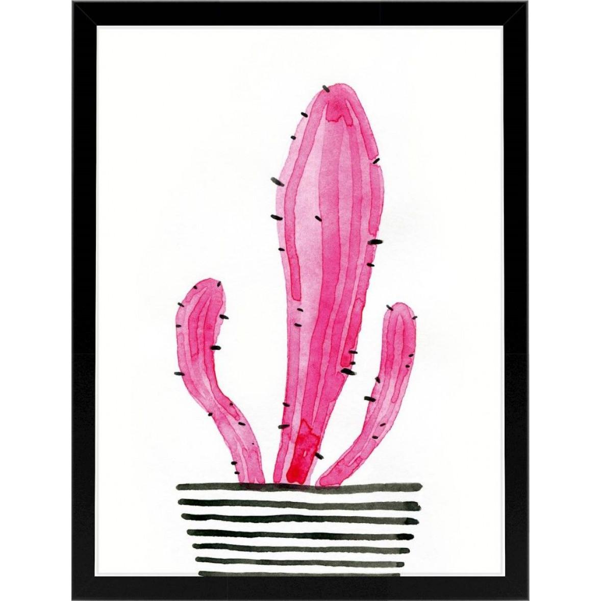 Kaktus   Rosa