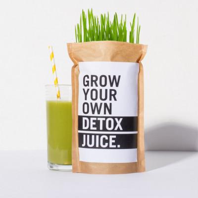 DIY Set Züchte Dein Eigenen Detox Saft
