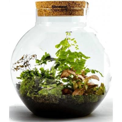 DIY Pflanze | Botanische Mischung