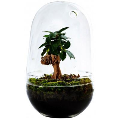 DIY Pflanze Jar Medium | Ficus Ginseng