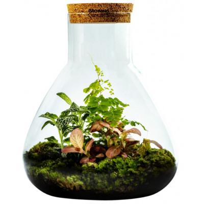 DIY Pflanze Erlenmeyer Large | Botanische Mischung