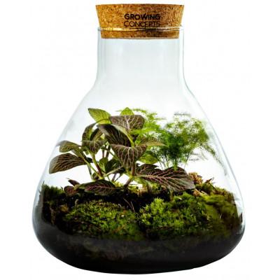 DIY Pflanze Erlenmeyer Medium | Botanische Mischung