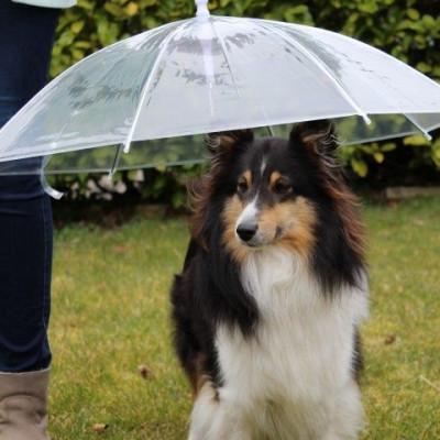 Regenschirmhund | Transparent