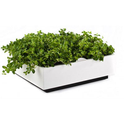 Karoo indoor & outdoor green wall - White