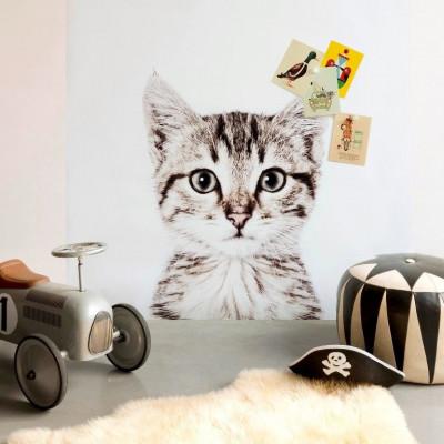 Magnettapete - Katze
