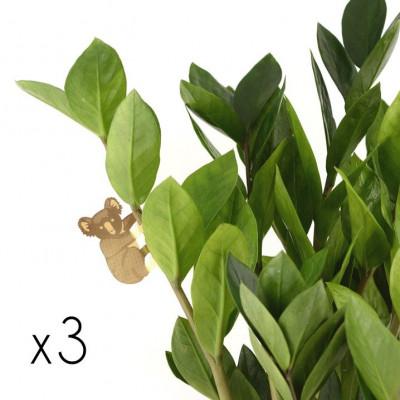 Plant Animals Set of Three | Koala / Monkey / Squirrel